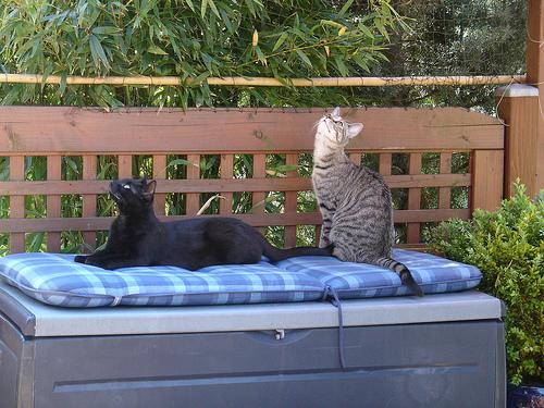 unsere terrasse wird nun katzensicher seite 2. Black Bedroom Furniture Sets. Home Design Ideas