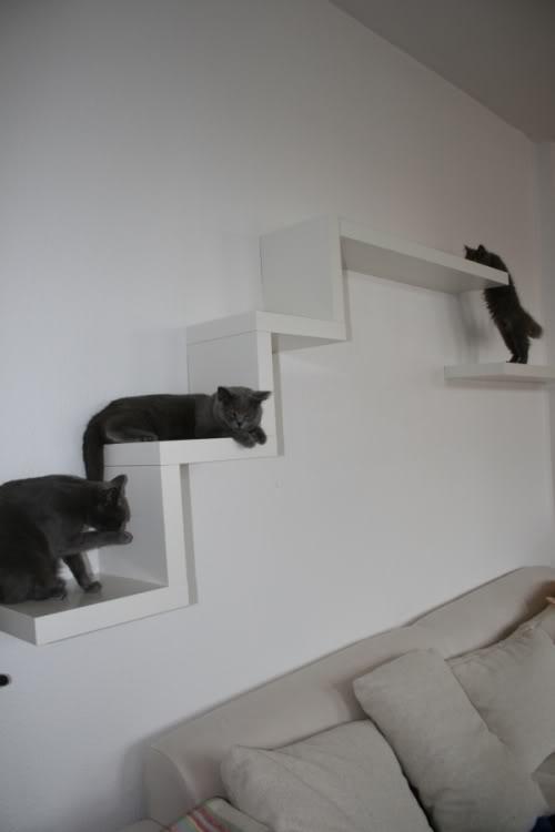 zeigt mal eure kletterkonstruktionen catwalks seite 5. Black Bedroom Furniture Sets. Home Design Ideas