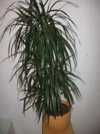 welche dieser pflanzen ist giftig seite 3. Black Bedroom Furniture Sets. Home Design Ideas