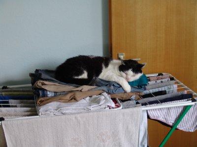 dinge f r katzen die man nicht braucht aber trotzdem von katzen geliebt werden. Black Bedroom Furniture Sets. Home Design Ideas