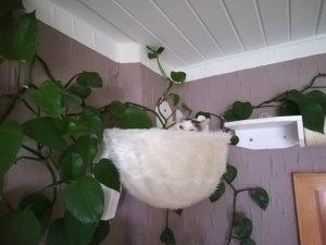 Katze im Sack.jpg