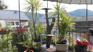 Dilen, Gordon, Neuer Kratzbaum ,Kaktus 051.jpg