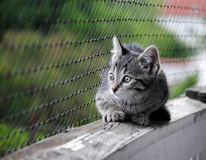 Balkon1-klein.jpg