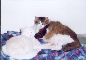 Gizzy & Holly mit Schlummerblick  04.07.jpg