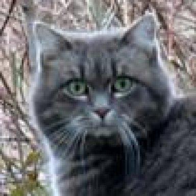 Was bedeutet Schwanzwedeln bei einer Katze?