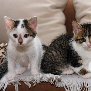 Daisy & Nova  Hier waren sie 6 Wochen alt