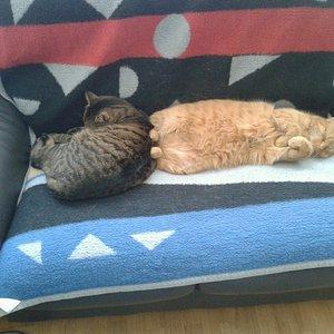 sofa zu klein