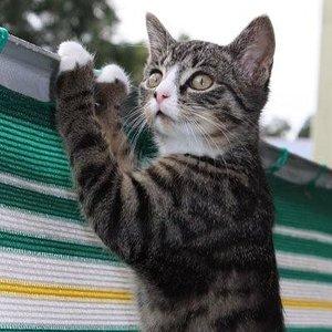 Mittlerweile kann sie schon locker über das Geländer gucken...