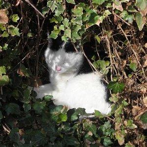 Lilly in Ihrer Schlaföhle in der Hecke