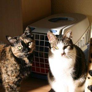 Pepper und Miki