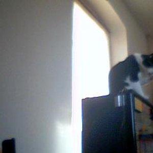 Ich spass auf das meine Katzen Vater keine Geld Rein Steckte